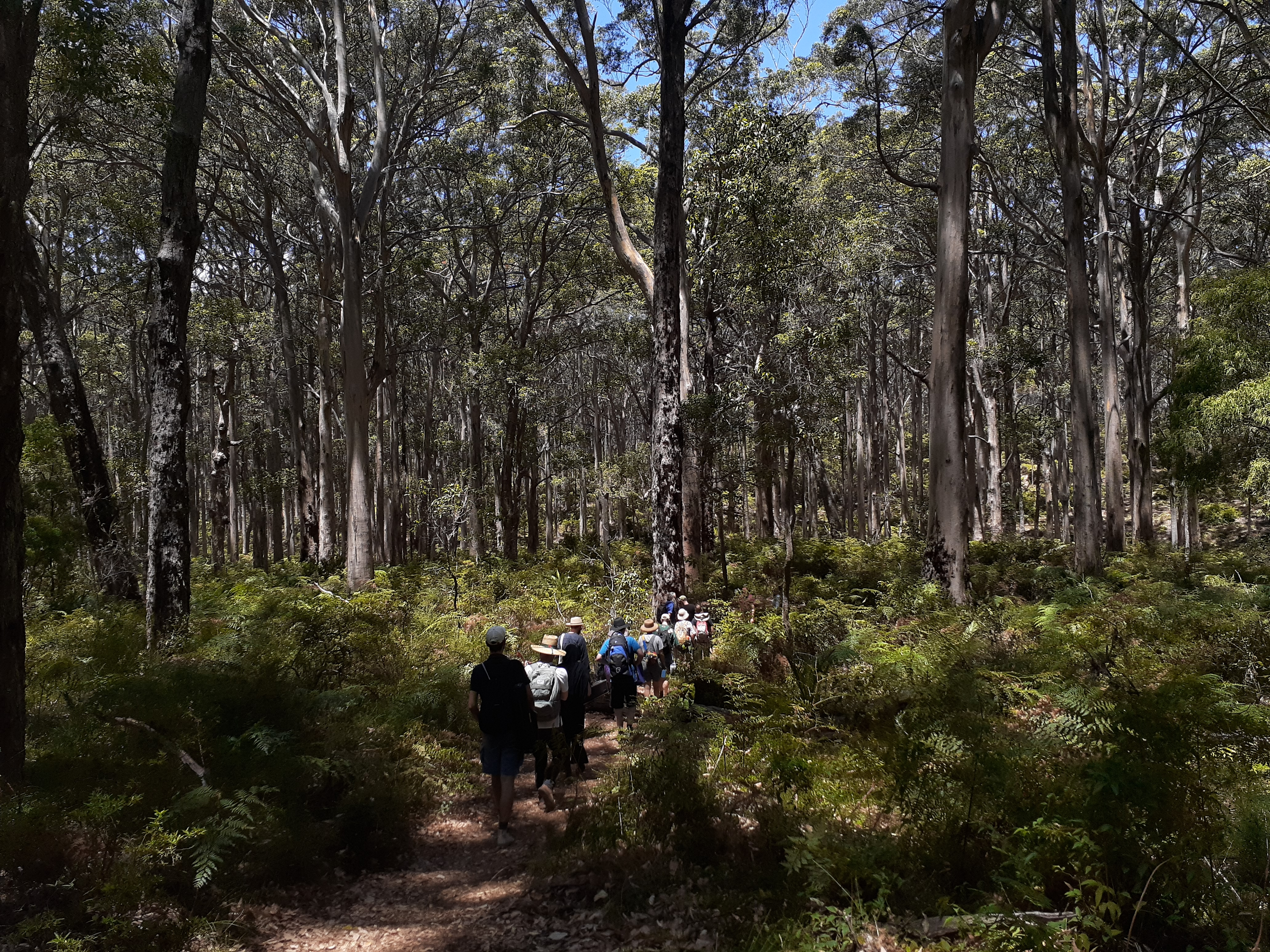 <p>The Boranup Karri Forest in the early afternoon.</p>